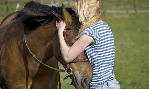 Los caballos y las emociones humanas