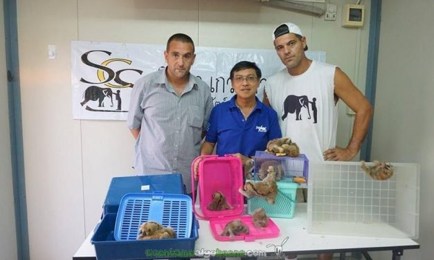 La asociación de Frank Cuesta recata a 35 loris
