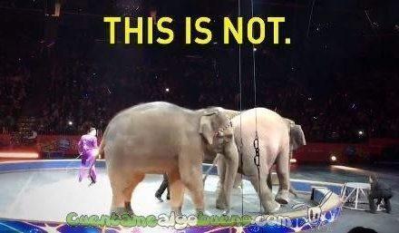 No habrá más elefantes en el mayor circo del mundo