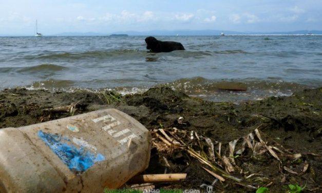 Bacterias que devoran el plástico