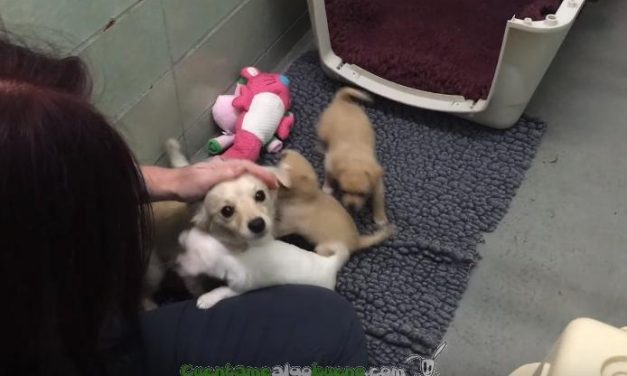 Cora se reencuentra con sus cachorros