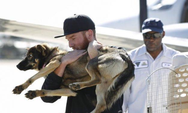 Aparece viva la perra que se perdió en mitad del océano hace un mes