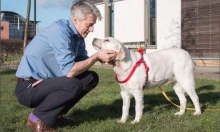 Primera operación a corazón abierto en un perro