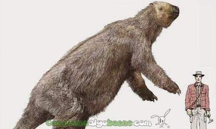 Fósiles del perezoso prehistórico más grande del mundo