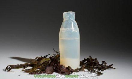 Botella hecha de algas reciclable y comestible