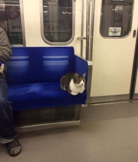 Gato viaja solo en metro