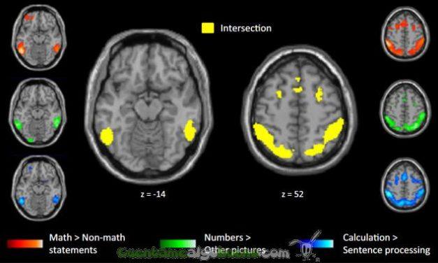 El cerebro de los matemáticos