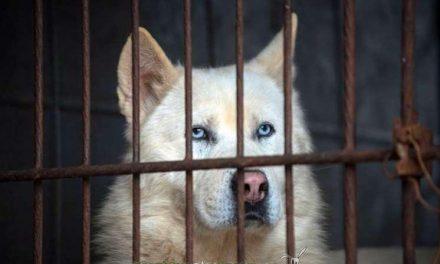 Liberan a 200 perros en Corea del Sur