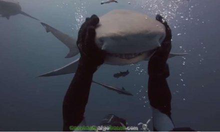 El tiburón cariñoso