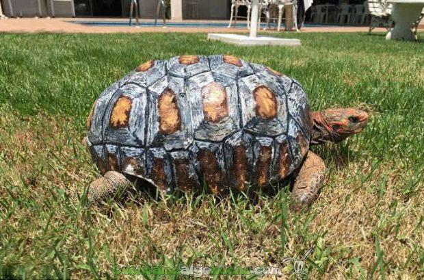 20160525-2-2-salvan-vida-tortuga-caparazon-impres-3d