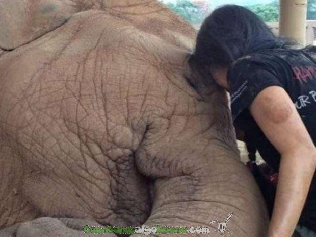 20160530-2-1-elefante-nana