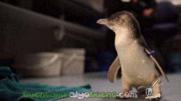 20160606-2-1-pinguino-protesis
