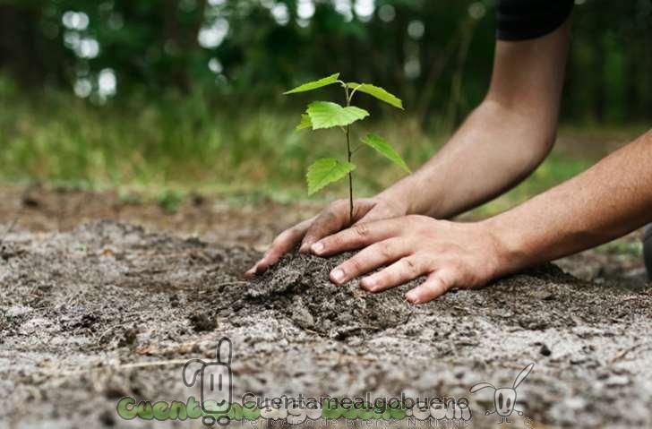 Reforestación por un medio ambiente más sano y natural