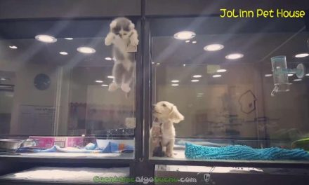Gato se escapa de su jaula para jugar con su perro vecino