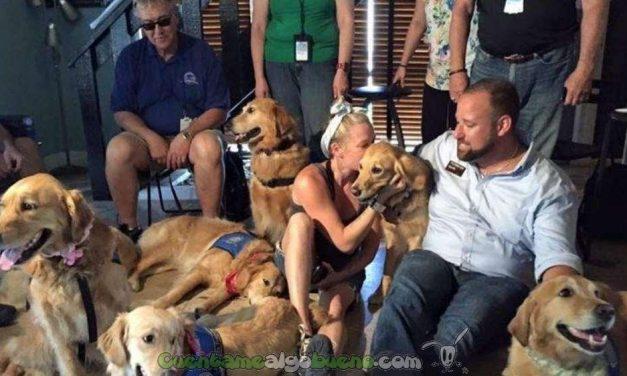 Solidaridad canina
