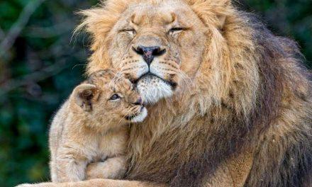 """Los animales serán considerados como """"Seres Sensibles"""" en Nueva Zelanda"""