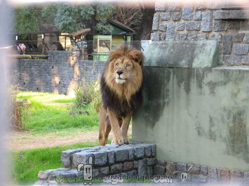 Argentina avanzando hacia el respeto a los animales