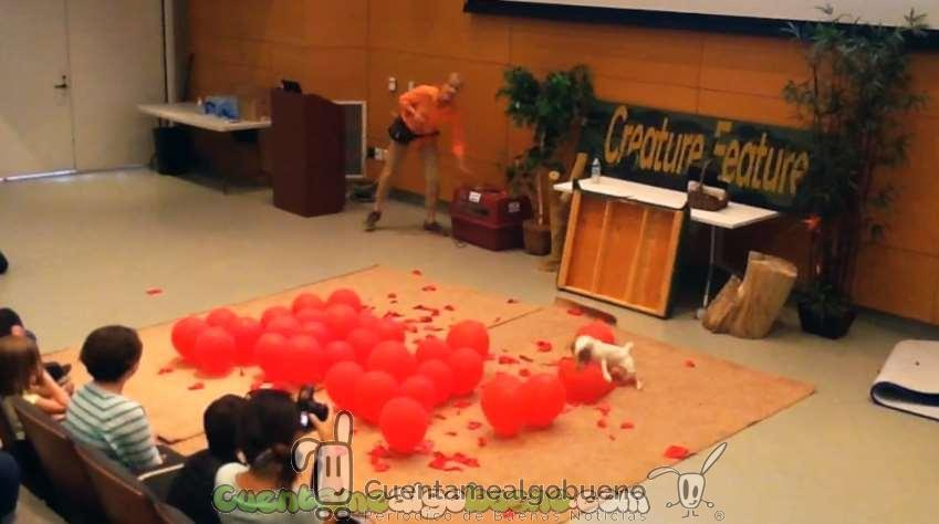 Perro bate el récord Guiness de explotar globos