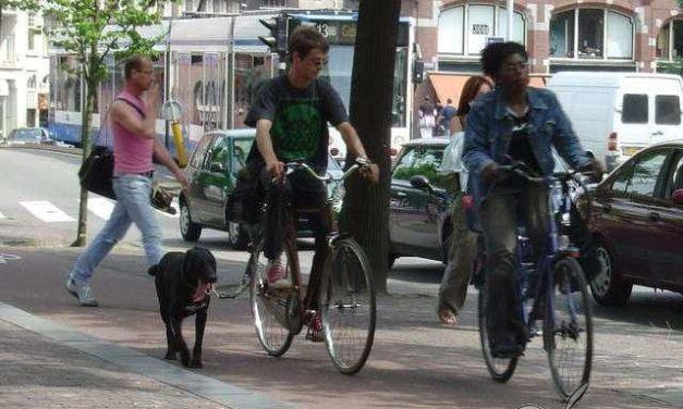 Ya no habrá más animales sacrificados ni recluidos en las perreras en Holanda
