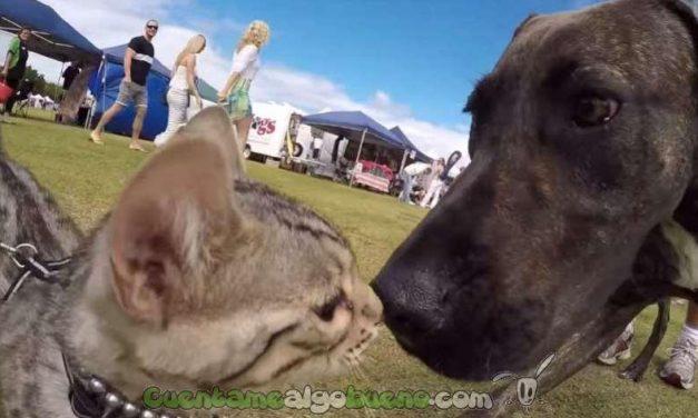 Un gato tan sociable que se hace amigo de 50 perros