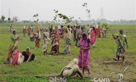 Plantan cerca de 50 millones de árboles en India en 24 horas