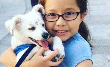 Enseñó a su perro a interpretar el lenguaje de signos