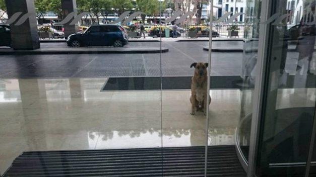 Azafata y perro abandonado forjan un vínculo especial