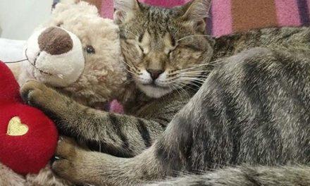Adoptó tres gatos ciegos que nadie quería