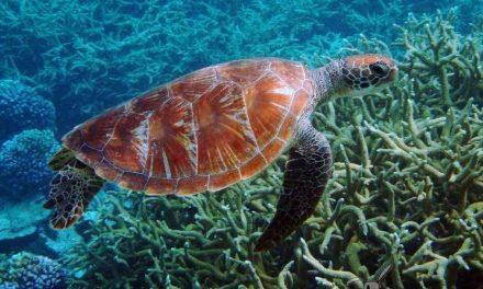 Estados Unidos crea el área natural protegida más grande del mundo