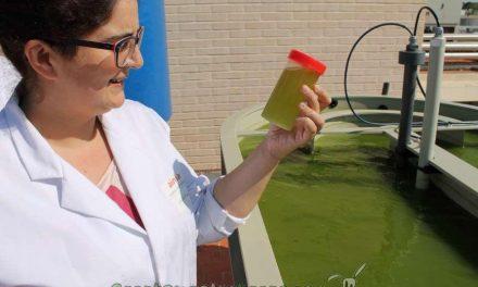 Obtienen bioenergía y biofertilizantes a partir de lodos de depuradora