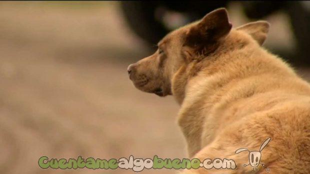20160913-1-bruno-perro-personaje-longville-02