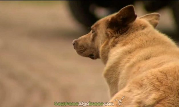 Un perro camina 6 kms cada día para visitar a sus vecinos