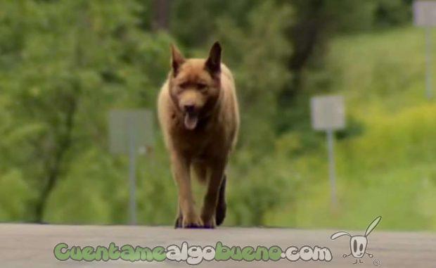 20160913-1-bruno-perro-personaje-longville-04