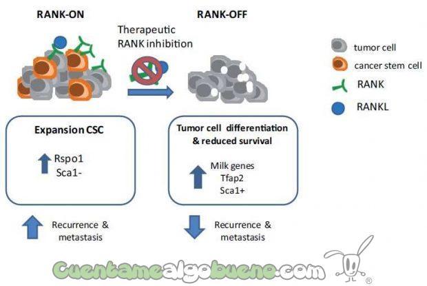 20160918-3-tratamiento-terapeutico-reduce-la-recurrencia-del-cancer-de-mama-01
