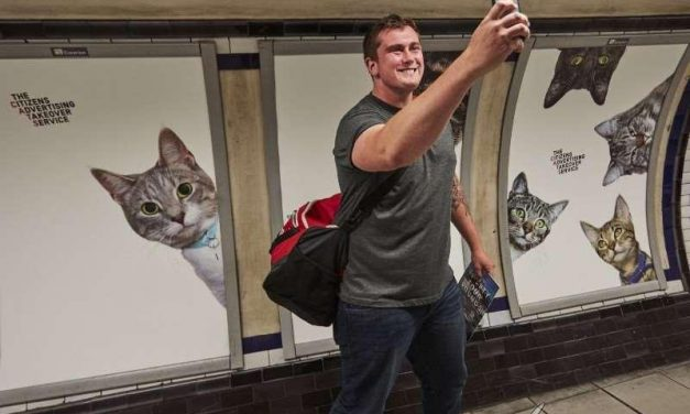Las paredes del metro de Londres se llenan de fotos de gatos por una buena causa