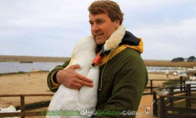 Cisne abraza a su rescatador