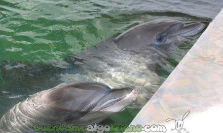 Graban una conversación entre dos delfines hablando como las personas