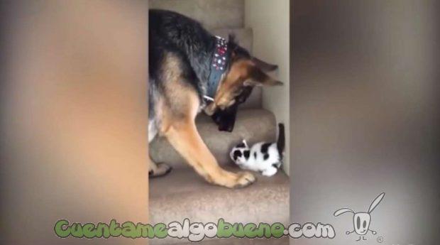 20160923-3-perro-ayuda-subir-escaleras-gatito-01