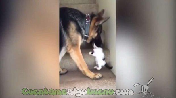 20160923-3-perro-ayuda-subir-escaleras-gatito-02