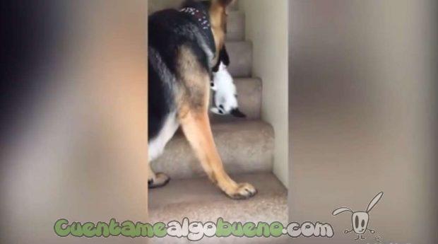 20160923-3-perro-ayuda-subir-escaleras-gatito-03