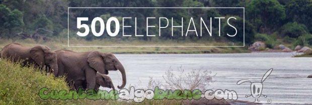 20160929-1-salvando-a-500-elefantes-01