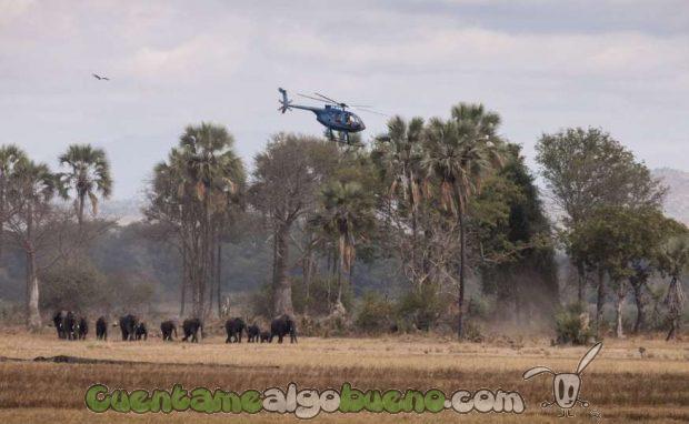 20160929-1-salvando-a-500-elefantes-02