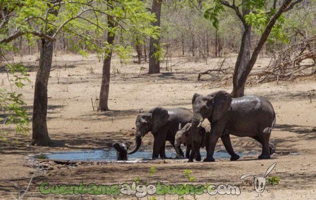 20160929-1-salvando-a-500-elefantes-03