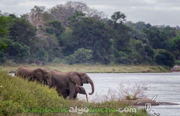 20160929-1-salvando-a-500-elefantes-04