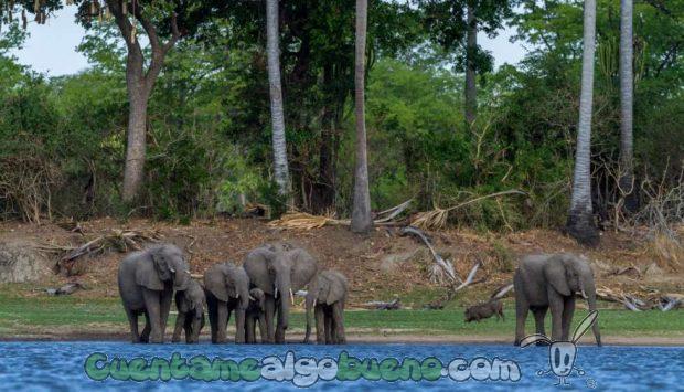 20160929-1-salvando-a-500-elefantes-05