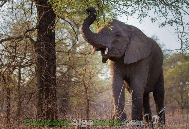 20160929-1-salvando-a-500-elefantes-07