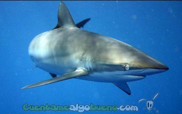 20161012-1-especies-tiburon-protegidas-01