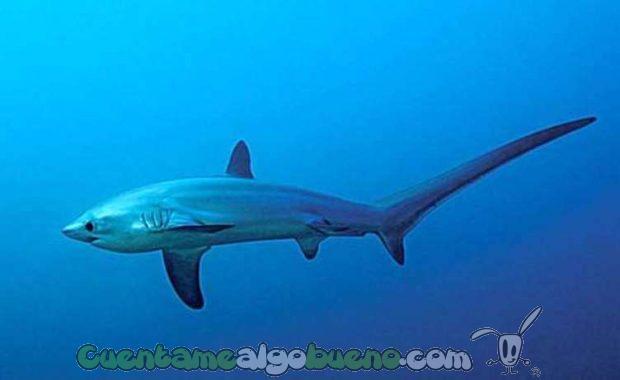 20161012-1-especies-tiburon-protegidas-02