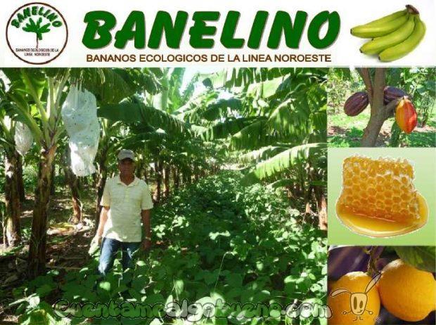 20161015-banelino-cultivo-platano-biodiversidad-republica-dominicana-01