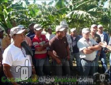 20161015-banelino-cultivo-platano-biodiversidad-republica-dominicana-03